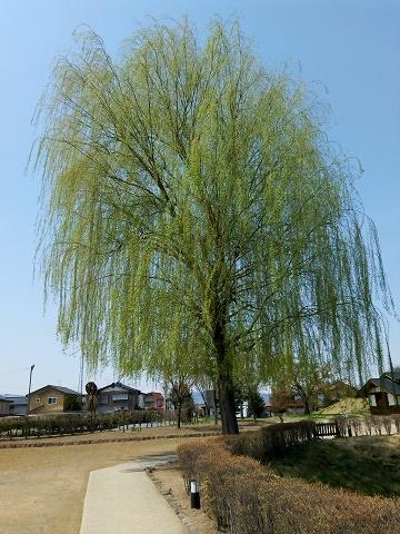 松代の春 (7)