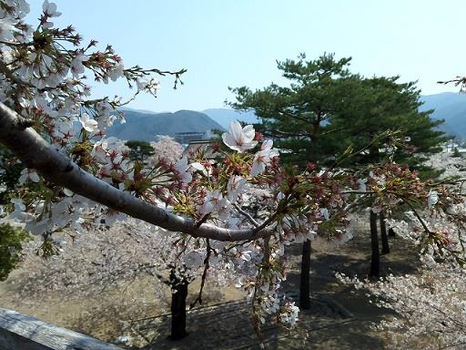 松代の春 (9)