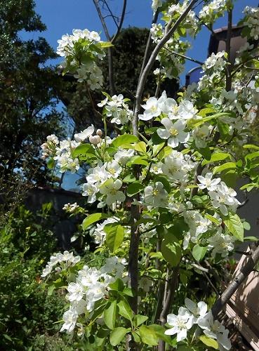 庭の春 (5)