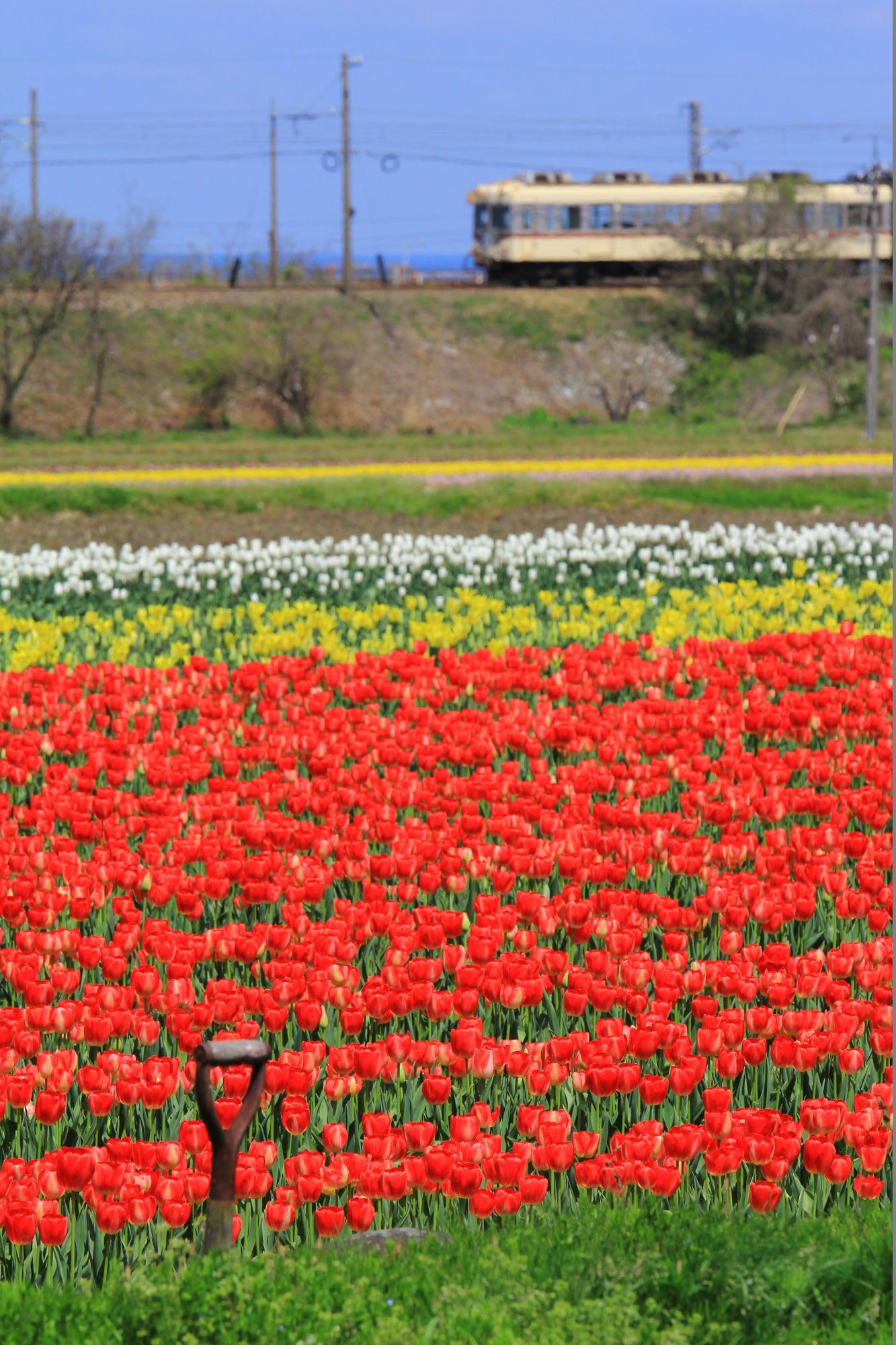 富山的春色情景