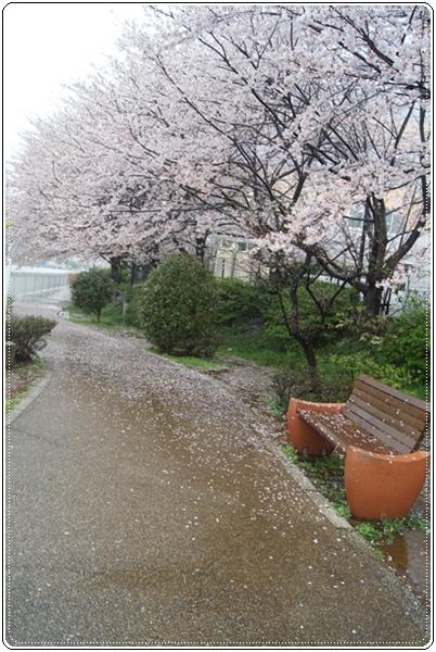 2016-4雨の散歩道