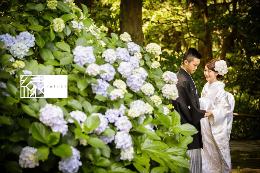 鎌倉紫陽花和装前撮り縁02