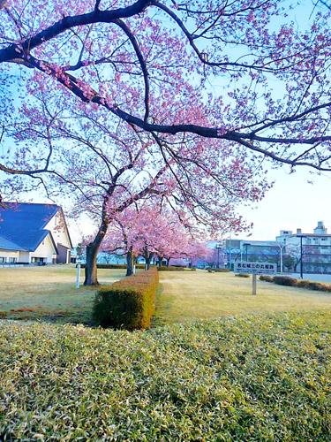 2016桜7