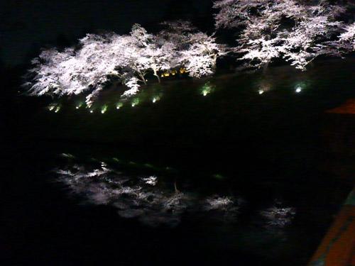 2016夜桜1