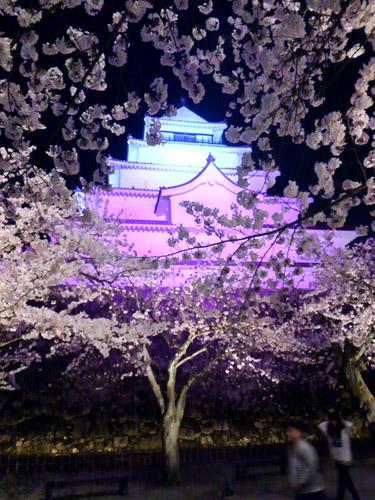 2016夜桜2