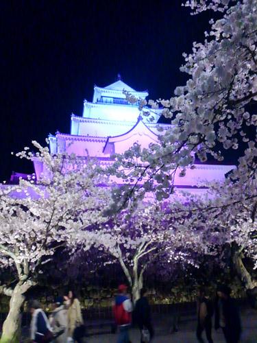 2016夜桜3