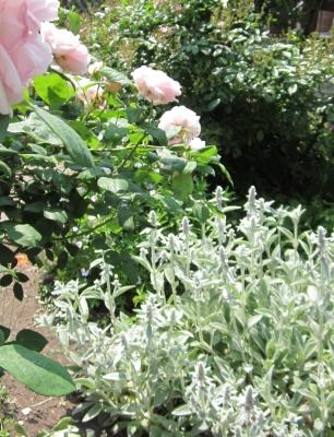 6月の庭10