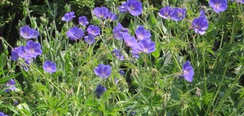 6月の庭5