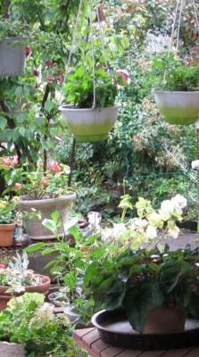 居間から庭を見る
