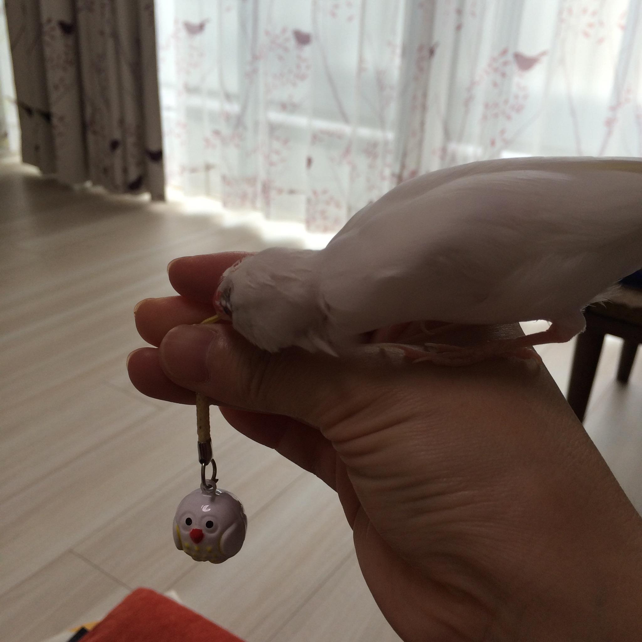 chiku2.jpg