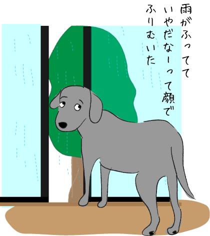 雨とラブラドール