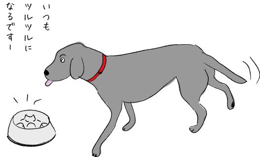 犬の食器とラブラドール