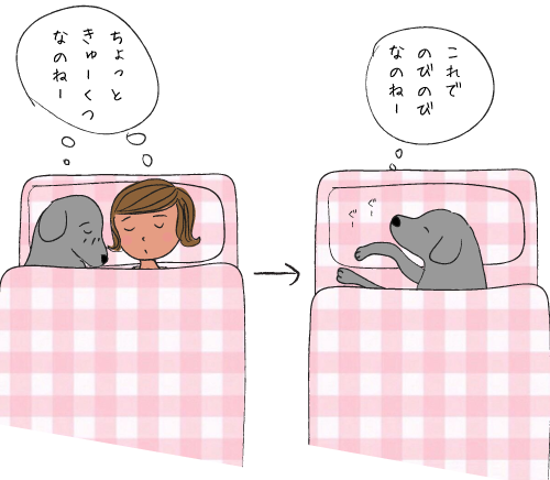 いっしょに眠るラブラドール