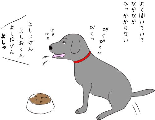 ごはんを食べる黒ラブ