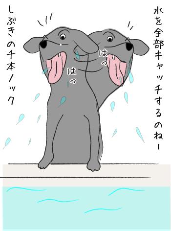 水をキャッチするラブラドール