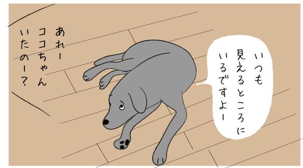 床に寝そべるラブラドール01