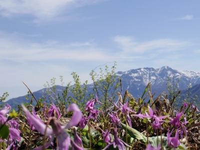 八海山とカタクリ