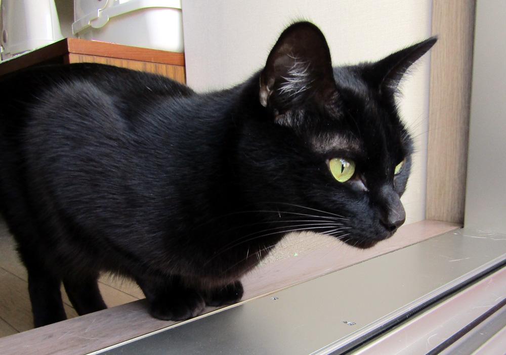 黒猫のチョコ