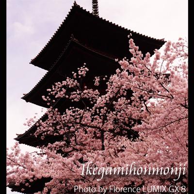 池上本門寺160402