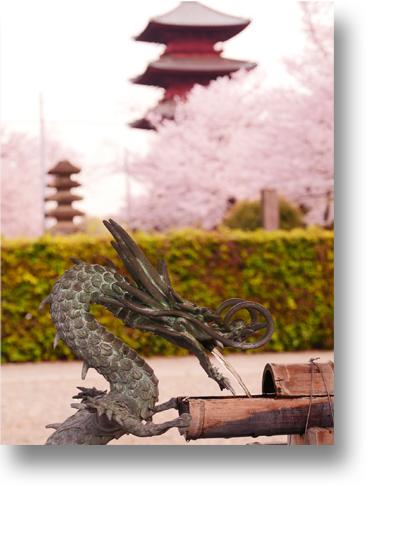 池上本門寺160404