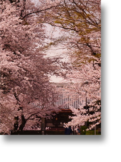 池上本門寺160410