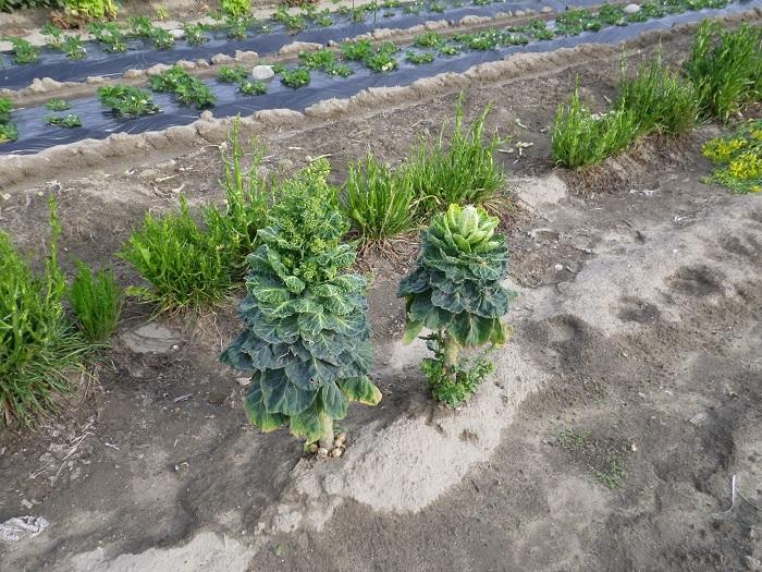 収穫6_16_04_09
