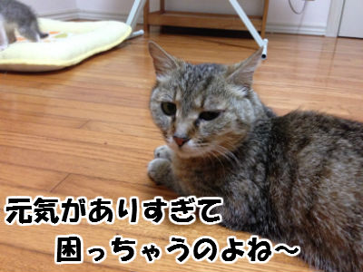 IMG_3595-1.jpg