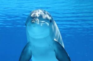 イルカやクジラなど海のほ乳類のアクセサリー、ストラップ、ぬいぐるみ\u2026楽天ショップで買えてプレゼントにも最適な癒しグッズをご紹介します。  イルカをはじめクジラや