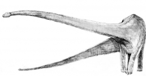 Sketchmamenchisaurus.jpg