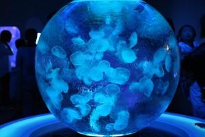 aquarium-368043_960_720.jpg