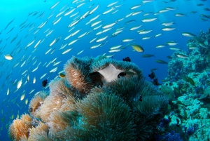 diving-689825_960_720.jpg