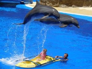 dolphins-1170342_960_720.jpg
