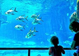 fish-1195749_960_720.jpg