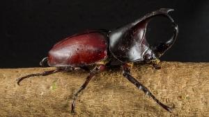 tropical-beetles-195899_960_720.jpg