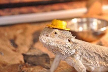 0623かんかん帽1