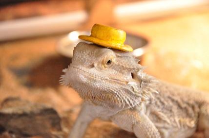 0623カンカン帽3