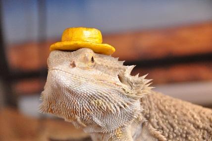 0623カンカン帽2