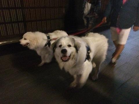 17祇園犬