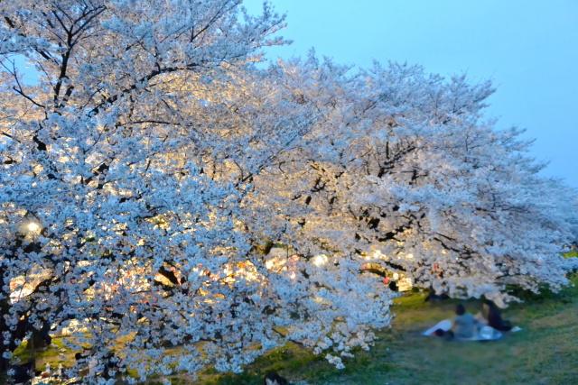 熊谷桜堤 (4)