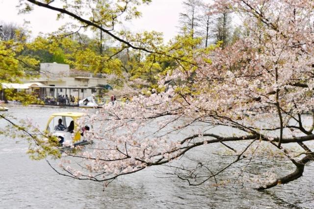 井之頭公園 (2)