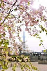 隅田公園 (3)