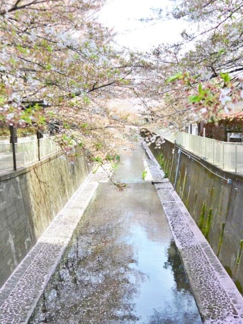 神田川 (1)