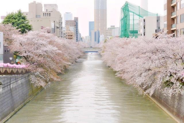 目黒川 (1)