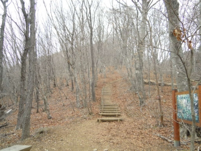 三頭山への道