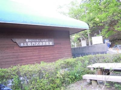西丹沢自然教室160505