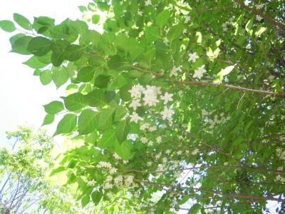 木の花160512