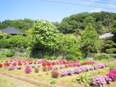 厳島湿生公園への入り口の道160518