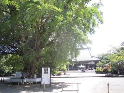遊行寺160603