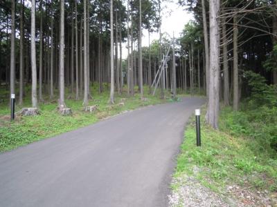 林道い号線に続くみたい