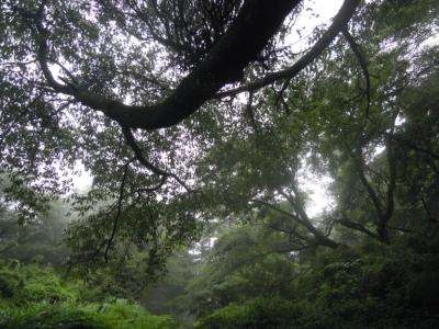 巨古木があちらこちら160628